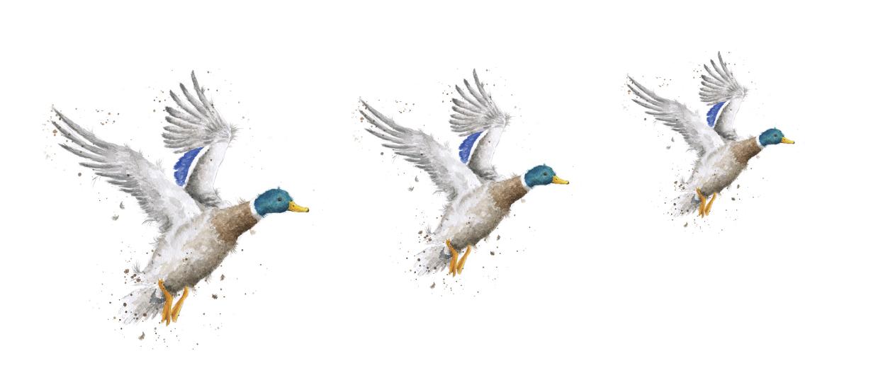 Wrendale Designs Ducks